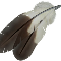 uploads feather feather PNG12979 24