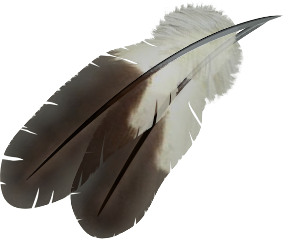 uploads feather feather PNG12979 25