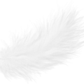 uploads feather feather PNG12980 10