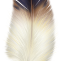 uploads feather feather PNG12983 22