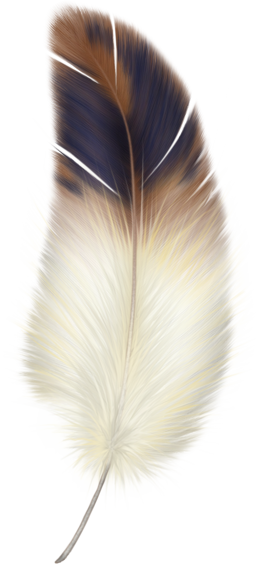 uploads feather feather PNG12983 3