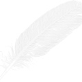 uploads feather feather PNG12991 23