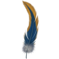 uploads feather feather PNG12992 20