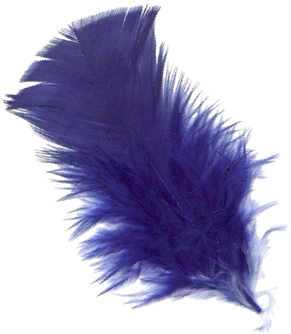 uploads feather feather PNG12993 4