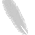 uploads feather feather PNG13001 17