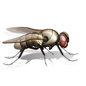 uploads fly fly PNG3945 24