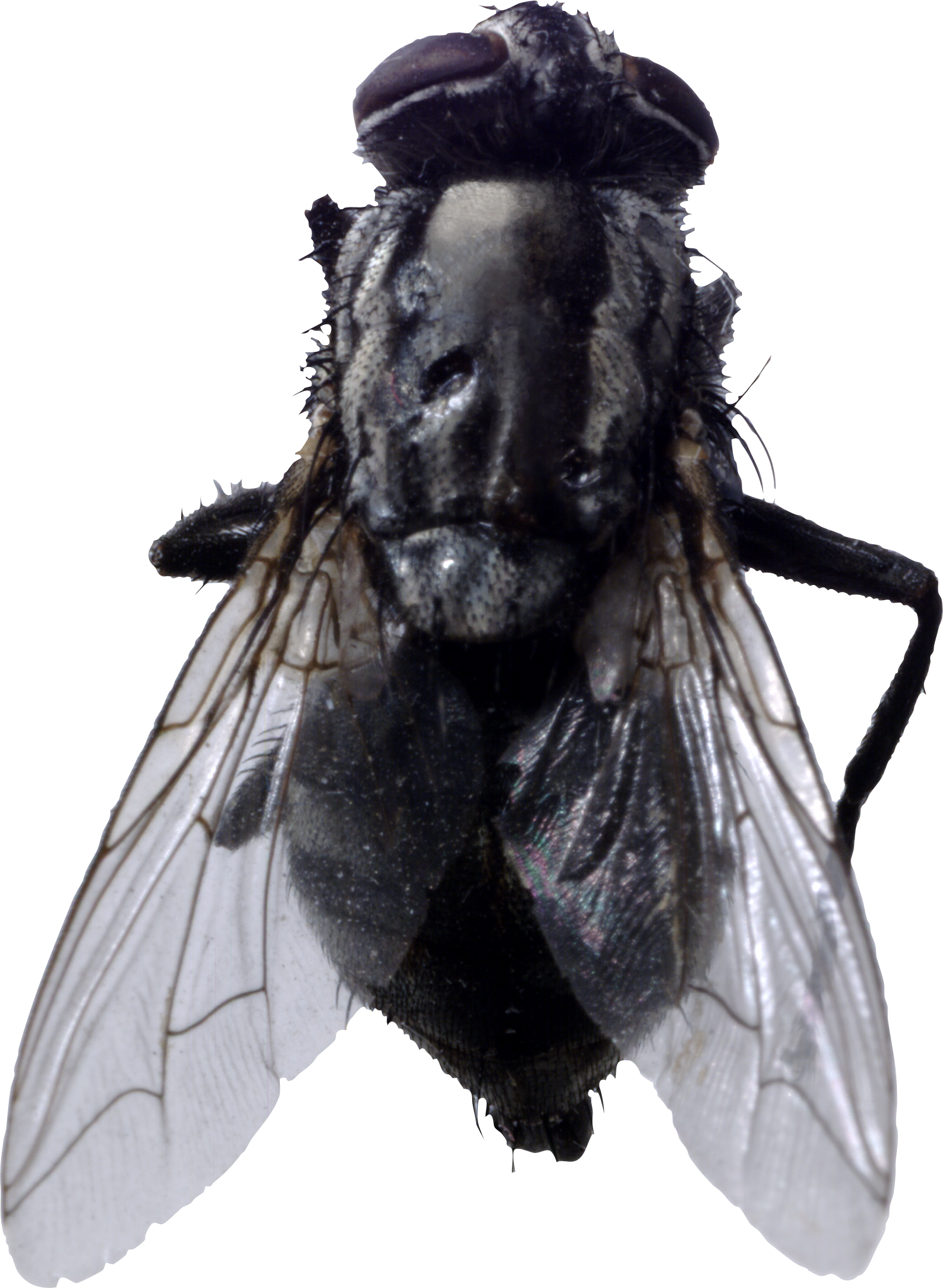 uploads fly fly PNG3948 24