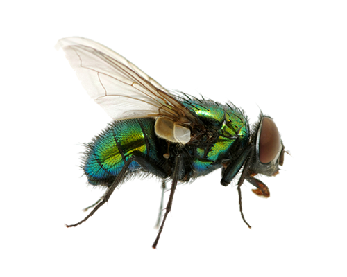 uploads fly fly PNG3955 25