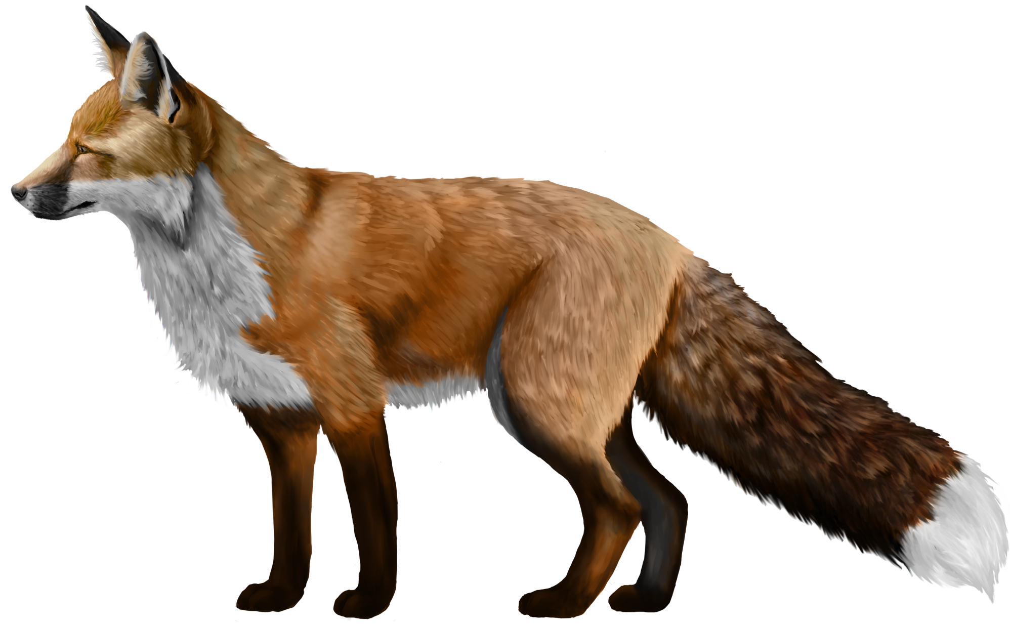uploads fox fox PNG23139 5