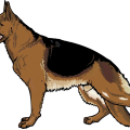 uploads german shepherd german shepherd PNG4 24