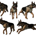 uploads german shepherd german shepherd PNG72 17