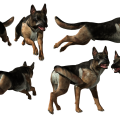 uploads german shepherd german shepherd PNG73 13