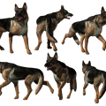 uploads german shepherd german shepherd PNG74 12