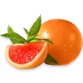 uploads grapefruit grapefruit PNG15256 16