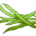 uploads green bean green bean PNG2 23