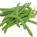 uploads green bean green bean PNG23 14