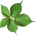 uploads green leaves green leaves PNG3653 14