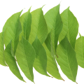 uploads green leaves green leaves PNG3667 24