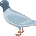 uploads gull gull PNG36 22