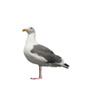 uploads gull gull PNG59 21