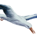 uploads gull gull PNG8 11