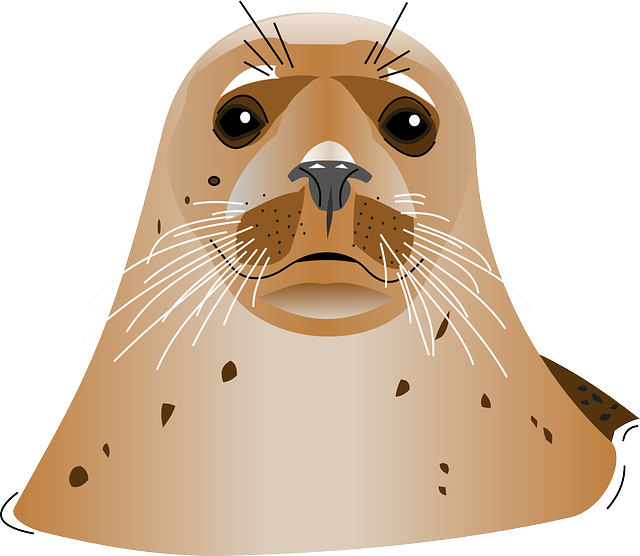 uploads harbor seal harbor seal PNG20 5