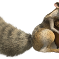 uploads ice age ice age PNG31 8