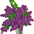 uploads lilac lilac PNG11 6