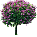 uploads lilac lilac PNG20 12