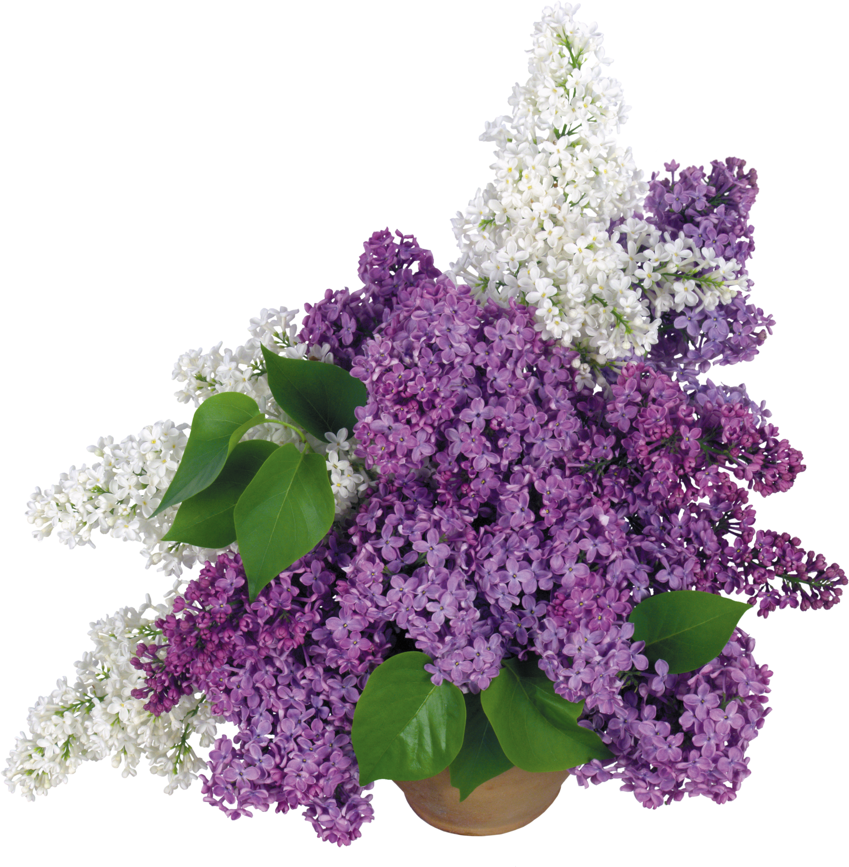 uploads lilac lilac PNG52 3