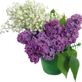 uploads lilac lilac PNG60 14