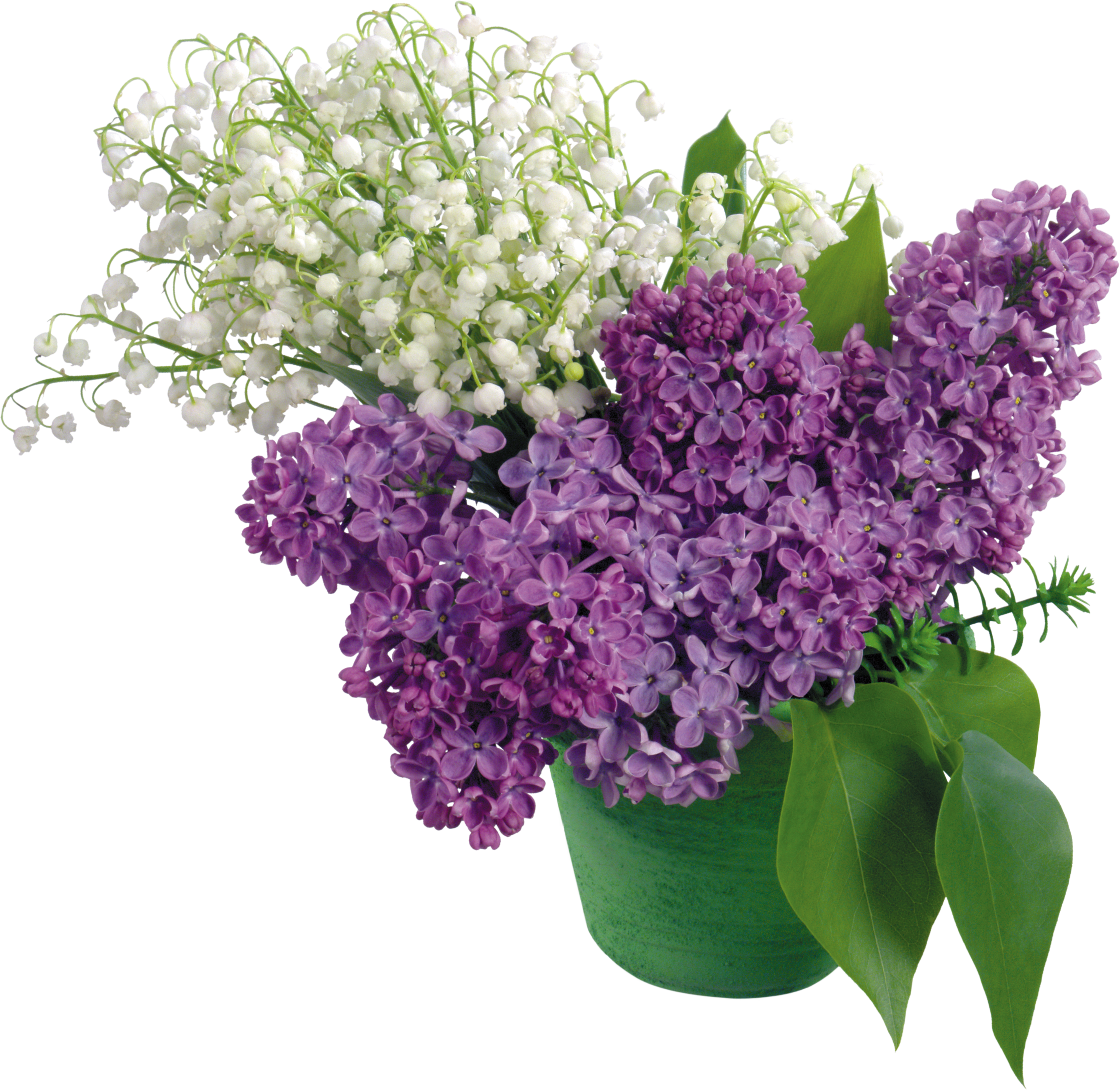 uploads lilac lilac PNG60 5