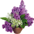 uploads lilac lilac PNG64 9