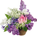 uploads lilac lilac PNG65 11