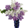 uploads lilac lilac PNG74 6