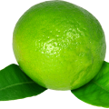 uploads lime lime PNG4 16