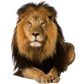 uploads lion lion PNG23255 7