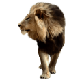 uploads lion lion PNG23256 14