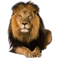 uploads lion lion PNG23258 24