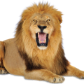 uploads lion lion PNG23263 15
