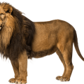 uploads lion lion PNG23268 16