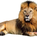 uploads lion lion PNG23270 13