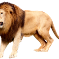 uploads lion lion PNG23271 8