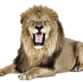 uploads lion lion PNG23275 6