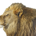 uploads lion lion PNG23280 21