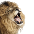 uploads lion lion PNG23282 10