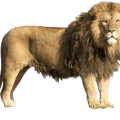 uploads lion lion PNG23286 20