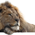 uploads lion lion PNG23288 18