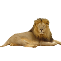 uploads lion lion PNG23292 11