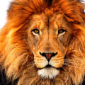 uploads lion lion PNG23294 12